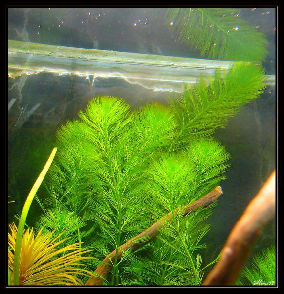 plante arriere plan aquarium atlub