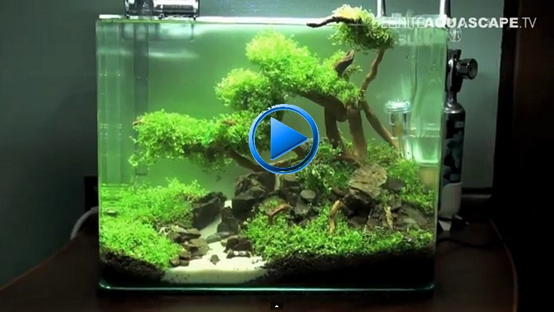 D coration aquarium crevette for Decoration pour aquarium d eau douce
