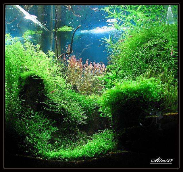 mes bacs plant s crevettes aquarium 42. Black Bedroom Furniture Sets. Home Design Ideas