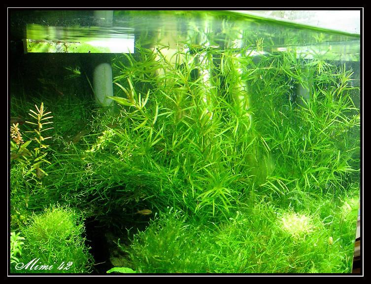 catalogue plantes 183 crevettes aquarium 42
