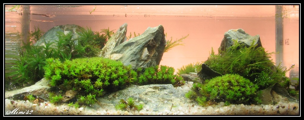 Mes bacs plant s crevettes aquarium 42 for Catalogue de plantes