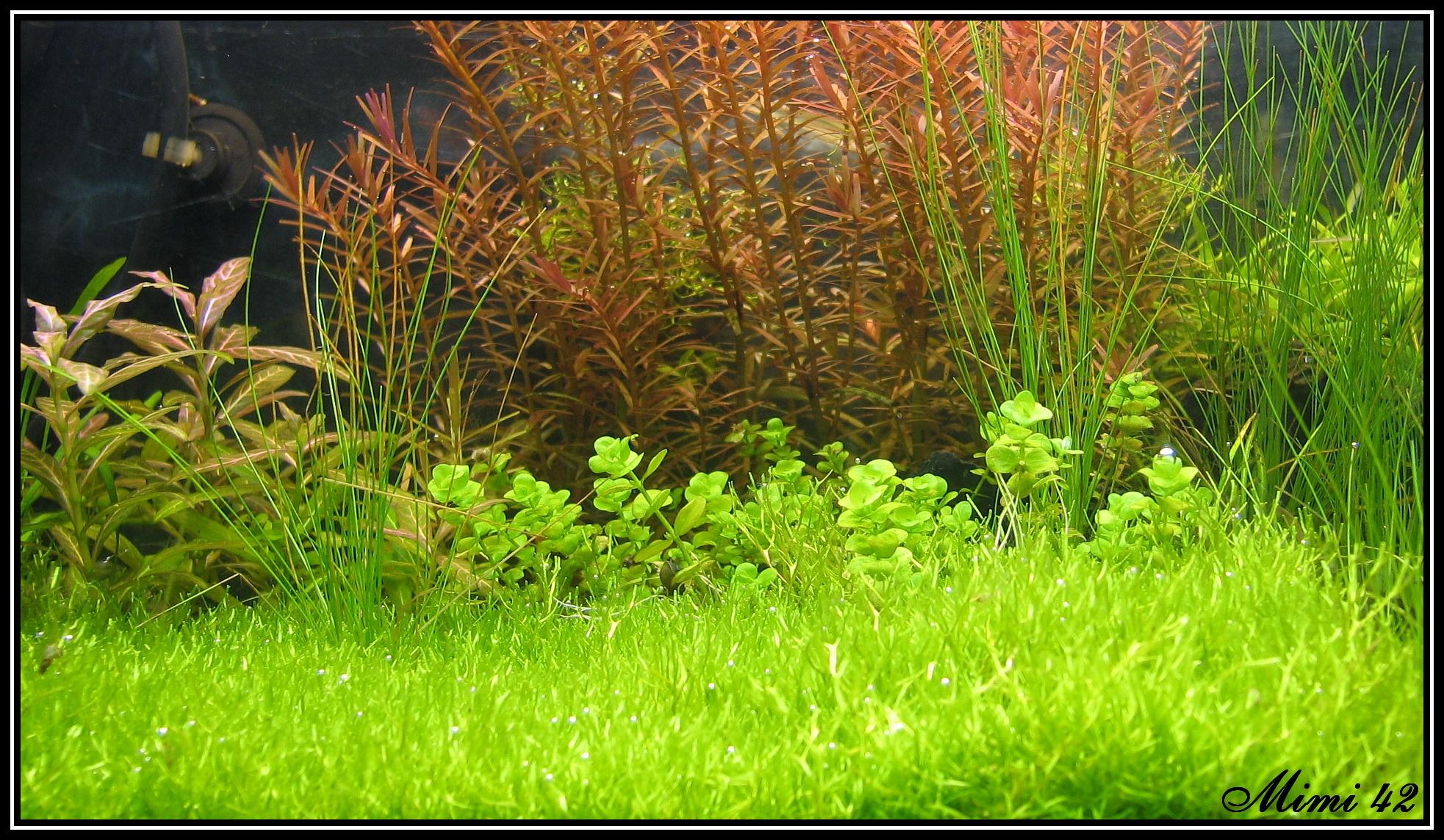 catalogue plantes crevettes aquarium 42. Black Bedroom Furniture Sets. Home Design Ideas