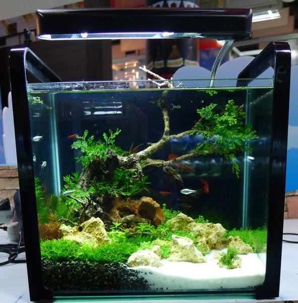 modeles de nanos bacs crevettes aquarium 42. Black Bedroom Furniture Sets. Home Design Ideas