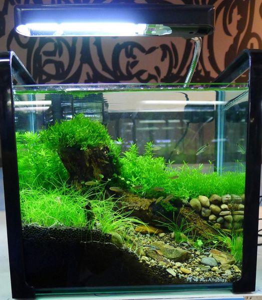 2011 octobre crevettes aquarium 42. Black Bedroom Furniture Sets. Home Design Ideas
