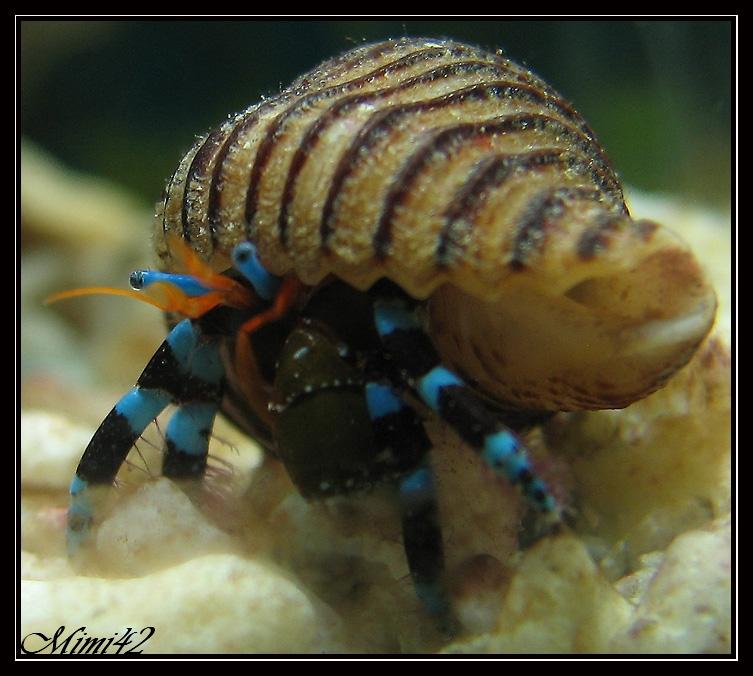 mes premiers invert 233 br 233 s 183 crevettes aquarium 42