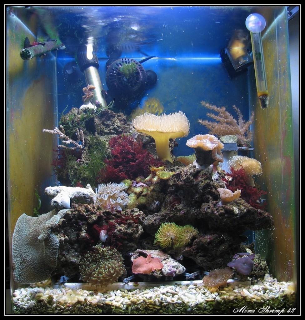 Bac eau de mer crevettes aquarium 42 for Bac communautaire poisson rouge